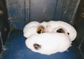 태어난지 2주된 강아지들